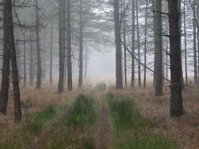 De natuurbegraafplaats als verborgen tuin